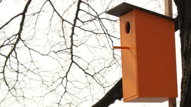 Singing Bird Houses